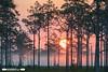 Triple N Ranch Sunrise (freshairphoto) Tags: sunrise fog triplenranch wildlife management area florida artspearing nikon d500 200500 zoom handheld