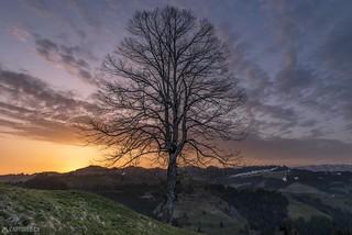 Sunrise tree - Emmental
