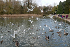 coombe abbey (Julaquinte) Tags: coombeabbey countrypark coventry birds feeding