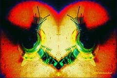 Snail #abstract (Stephenie DeKouadio) Tags: art artistic artwork abstract abstractart hypnotique colorful darkandlight