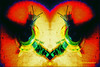 Snail #abstract (Stephenie DeKouadio) Tags: art artistic artwork abstract abstractart hypnotique colorful darkandlight