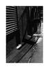 (billbostonmass) Tags: adox silvermax 100 129silvermax1100min68f fm2n 40mm ultron epson v800 chinatown boston massachusetts film