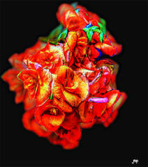 Flower Power (Mike Pesseackey aka UAGUY1) Tags: flowers art digitalart orange photoshop nikon conceptual