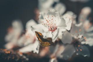 MARIAN SIMON PHOTOGRAPHY