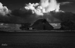 Merced Barn (NormFox) Tags: bw barn blackandwhite blackandwhiteartistry clouds farm field landscape monochrome mood outdoor rural shed sky trees atwater california unitedstates us