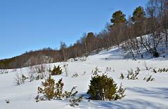 """""""ut i naturen""""... (KvikneFoto) Tags: natur norge hedmark landskap vinter winter snø snow tamron nikon"""