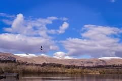 Gartmorn Dam 2, Scotland (picsbyCaroline) Tags: mountain sky clouds bird scenery scotland forest water dam grass landscape field park walk trees