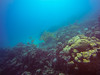 My backyard (Niklas FliNdt) Tags: backyard corals coral redsea water travel nature background gopro gopro4silver fishes yellow fish tropical vacation egypt ägypten instagram freediving scuba diving underwater