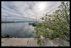 the fig tree on the pier (ukke2011) Tags: nikond850 nikkor1428d harbor porto sea mare boats barche tree albero fig fico