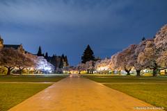 UW Quad 10 (BobbyFerkovich) Tags: universityofwashington quad cherry trees full moon night long exposure