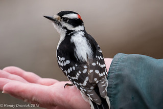 Friendly Woodpecker