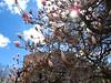 Bärengraben & Rosengarten (karoo79) Tags: springtime rosengarten bern stadtbern frühling blossoms kirschbaumblüte kirschbäume aussicht switzerland suisse berne berna bären bärengraben sightseeing turiste touriste bernermünster berneraltstadt flowers cherryblossoms dayoff freitagder13te ausflug