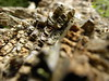Dead wood layers (cod_gabriel) Tags: wood lemn layers busteni buşteni prahova prahovavalley valeaprahovei romania roumanie românia