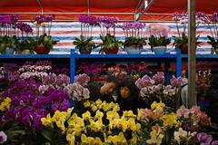 Hong Kong (jaumescar) Tags: hongkong kowloon flower market couple people street photo color yellow decoration urban cny customer shop