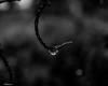 The Hook (that_damn_duck) Tags: blackwhite monochrome raindrop rain drop droplet nature nikon waterdrop bw blackandwhite