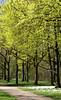 Mainz, Am Drususwall, Ahorn / maple (acer) (HEN-Magonza) Tags: mainz amdrususwall frühling springtime rheinlandpfalz rhinelandpalatinate deutschland germany flora horn maple acer