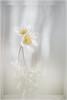 The two of us (IngridVD. Photography) Tags: macro bosanemoon wit geel bloem flower soft dreams light bos forest trees minimalism ingrid van damme ingridvd vandain canon5dmkiv canon