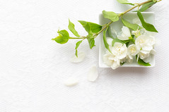 163/365: Still blossoming (judi may) Tags: 365the2018edition 3652018 day163365 12jun18 blossom flowers flora floral bowl dish highkey leaves white whiteonwhite whitebackground negativespace canon5d 50mm flatlay stilllife tabletopphotography lace