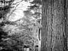 campus critter (jojoannabanana) Tags: 3652018 blackandwhite critter monochrome panasoniclumix squirrel tree trunk