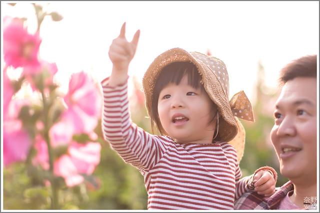 3月台南 親子寫真可以這樣拍 木棉花 蜀葵 小麥 一次讓你拍個夠 (55)