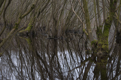Swampy Knarbos Lelystad