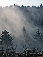 Clouds / fog and forest (Roelofs fotografie) Tags: wilfred roelofs nikon d5600 2018 clouds sky sun spring forest fotgrafie foto fog nature natuur belgium color cozy ardennen samree landscape mist grass tree woods mountain