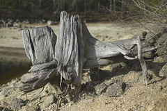 wood stones water (verblickt) Tags: wood forest stones bank beach lake barrierelake woodquarter loweraustria ottenstein