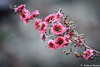 Forgive Others, Not Because They Deserve Forgiveness, But Because You Deserve Peace (_Natasa_) Tags: flowers pink dof depthoffield closeup macro canon canoneos7d canonef100mmf28lmacroisusm natasaopacic natasaopacicphotography forgiveness