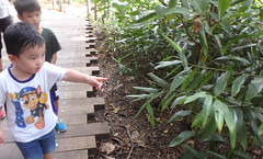 Chek Jawa boardwalk tour with the Naked Hermit Crabs (wildsingapore) Tags: chekjawa pulau ubin guiding people singapore marine intertidal shore seashore marinelife nature wildlife underwater wildsingapore island