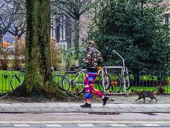 Walking By (110/365) (Walimai.photo) Tags: color colour street calle amsterdam holanda nederlands holland cat gato lumix lx5 panasonic