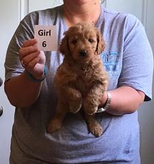 Ella Girl 6 pic 4 4-21