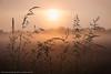 Misty sunrise (2) (Fotocollectief2020 (Belgium)) Tags: blauw