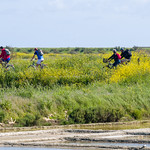 Vélos dans l'ile de Ré thumbnail