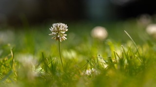 early morning on my meadow - früher Morgen auf meiner Wiese
