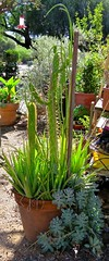Flowerpot of Succulents