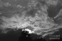 Gray sun (Aliceheartphoto) Tags: blackandwhitephotography blackandwhite sun trees naturephotography nature brightsun warmth sky clouds cincinnatiphotography cincinnati ohio sony cybershot