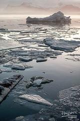 """Icy Blue"" (Phil Benton Photos) Tags: jökulsárlónglacierlagoon iceland iceberg blue winter ice cold nature"