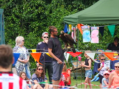 Golden Eagle - pep talk before the off - DSCF3674 (SierPinskiA) Tags: ruffordabbeycountrypark rufford knightsofnottingham fujixs1 jousting medieval horse knights goldeneagle falcon