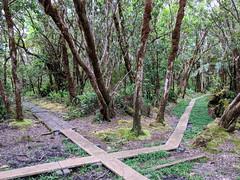 KauaiResearchTrip_141_AlakaiIntersection (EnduroDoug) Tags: oahu kauai hawaii napali kalalaubeach kalalau valley alakai swamp kapaa hanalei honolulu