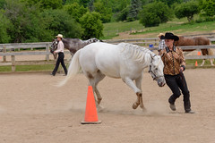 JBC_4842.jpg (Jim Babbage) Tags: krahc horseshow appaloosa horses 2018