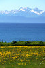 Thirds (Austin.Welsh) Tags: blue green bay kachemak alaska homer dandelion mountain ocean sony a99ii 70200g2 summer yellow sunny bright