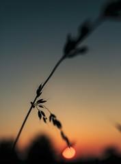 2018-06-15_01-11-20 (xskyven) Tags: praha bokhei sunset walkaround orange flower nature summer czech
