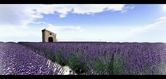 A Walk in Provence-Preview (Bluesean Yiyuan) Tags: never totally dead nevertotallydead chapter four gacha second life lavender love provence sud france french