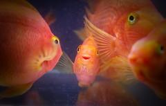 Oh hey! (Boom Sonjaroon) Tags: fish animal smile