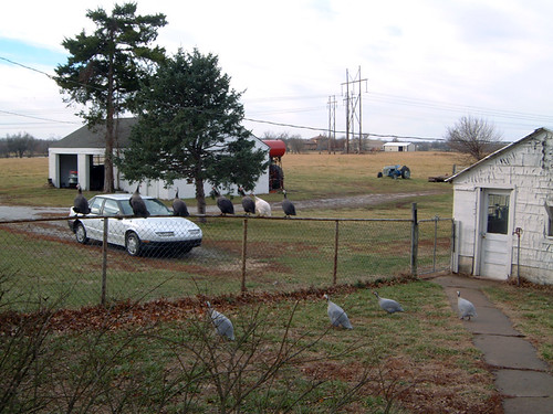 2004-01-02 - Turkeys-001