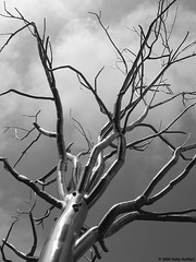 Chrome Tree