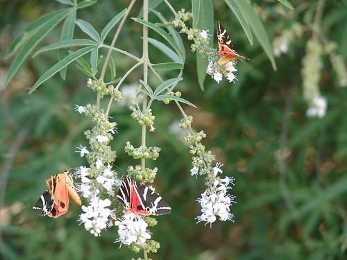 """""""2006 Rhodos"""" Schmetterlingstal"""