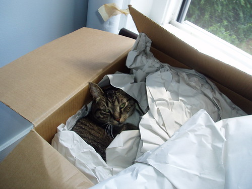 Unpacking the cat
