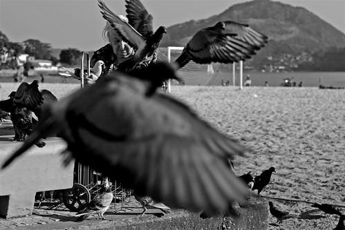 Maria e os pombos