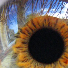 evil eye (evilnick) Tags: iris reflection eye square explore sunflower grainy pupil protected eylashes purged whitebit